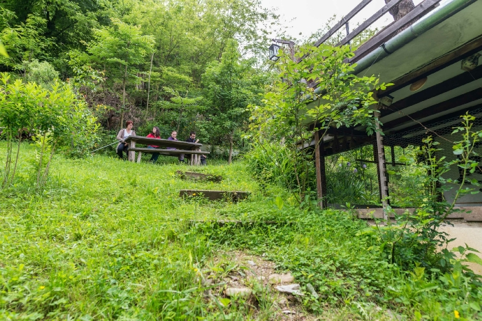 Pensiunea Iedera - accommodation in  Apuseni Mountains, Transalpina (04)