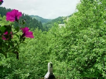 Cabana Viselor - accommodation in  Apuseni Mountains, Motilor Country, Arieseni (04)