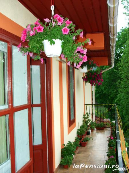 Pensiunea Georgiana - accommodation in  Fagaras and nearby, Muscelului Country (05)