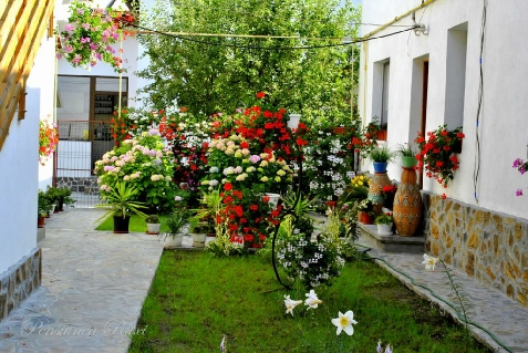 Pensiunea Ruxi - accommodation in  Fagaras and nearby, Muscelului Country (Surrounding)