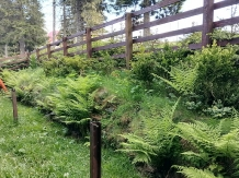 Cabana Brandusa - accommodation in  Hateg Country, Transalpina (05)