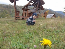 Casele de vacanta Luca si Vicentiu - accommodation in  Maramures Country (33)