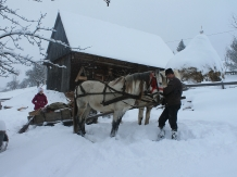 Casa Arnica Montana - accommodation in  Apuseni Mountains, Motilor Country, Arieseni (42)