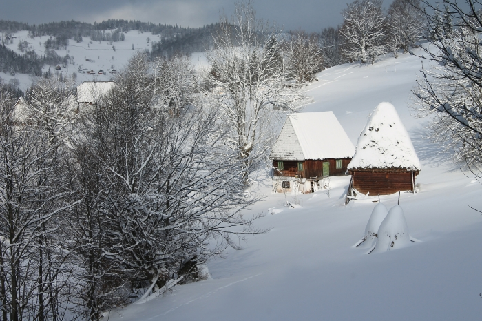 Casa Arnica Montana - accommodation in  Apuseni Mountains, Motilor Country, Arieseni (44)