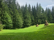 Cabana Poiana Dealul Frumos - accommodation in  Apuseni Mountains, Motilor Country, Arieseni (25)