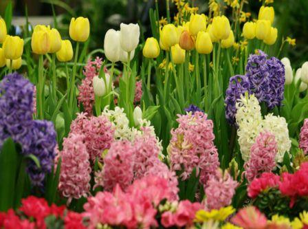 Flori De Primăvară Din Pădure Adunate Curiozităţi Despre